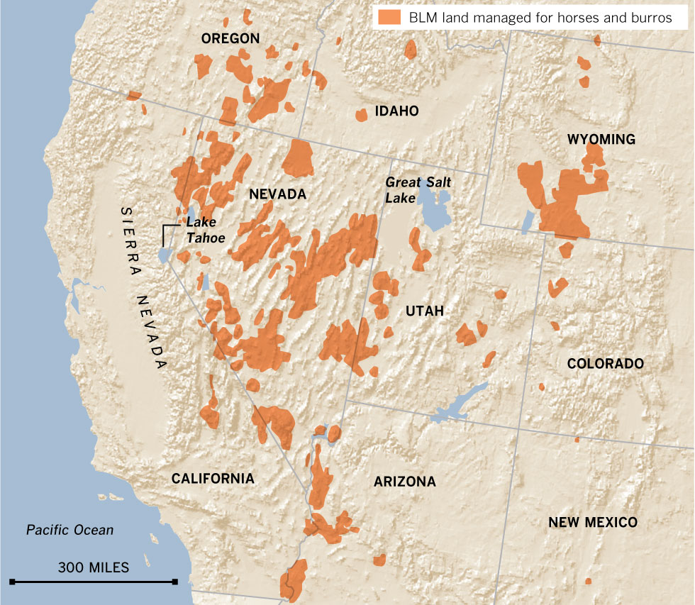 INTERACTIVE GRAPHIC: The West's wild horses   Data Desk   Los