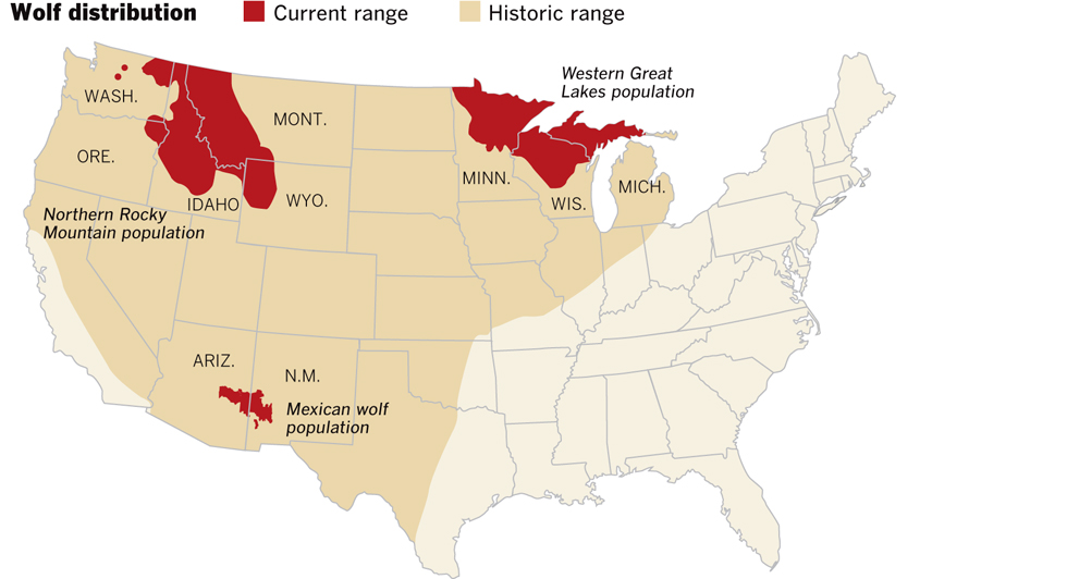 Graphic Gray Wolves History And Recovery Data Desk Los - Maps of the location of wolves in the us