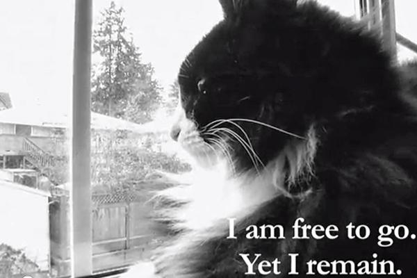 cat stress diffuser